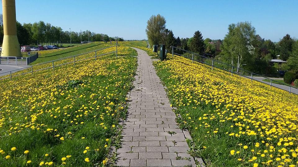 Mùa hoa dại nước Đức đẹp tuyệt vời
